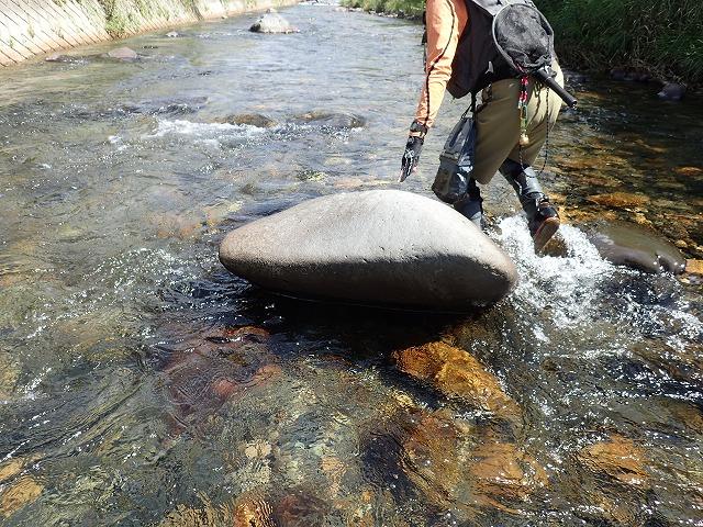 この石の裏で岩魚