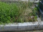 須賀墓地 外柵基礎石
