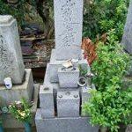 墓所に生えた木
