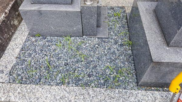 雑草が生えてしまった墓所