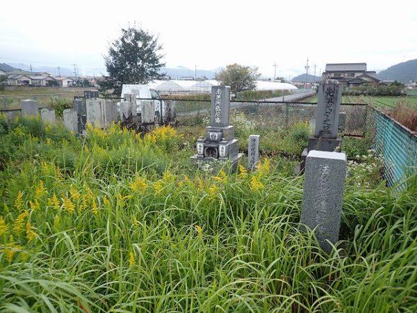 草ボウボウの墓所