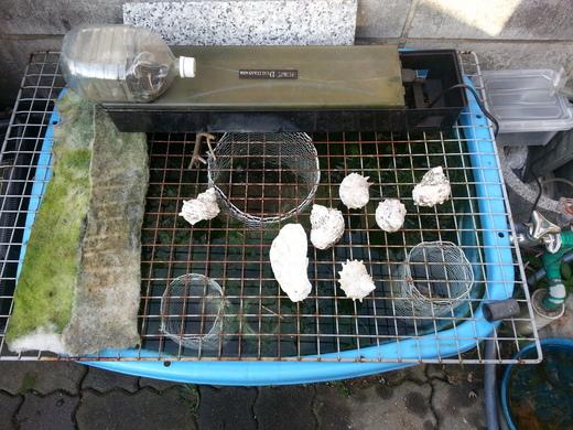 金網で親金魚が入れない安全地帯を作った