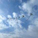 綺麗に上がった連凧