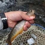 今回の一押し岩魚