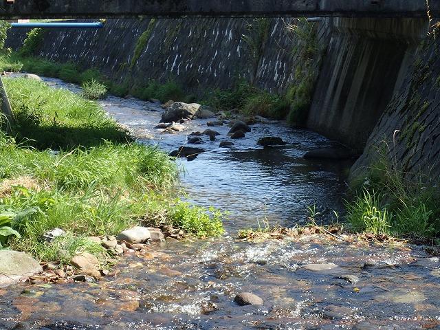 橋の下でヤマト岩魚
